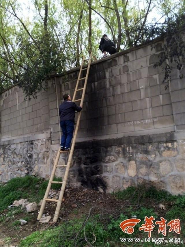 西安秦岭野生动物园围墙外,村民收费搭梯帮游客翻墙入园