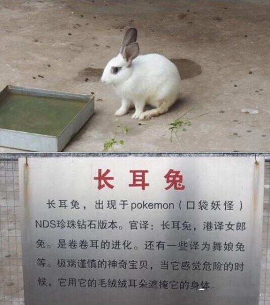 廊坊一动物园被指挂羊头卖狗肉:老虎笼子关狗,鳄鱼池养天鹅